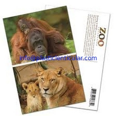 China PLASTICLENTICULAR cheap price 3D postcards 3D animal post cards with lenticular sheet material supplier