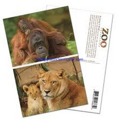 PLASTICLENTICULAR cheap price 3D postcards 3D animal post cards with lenticular sheet material